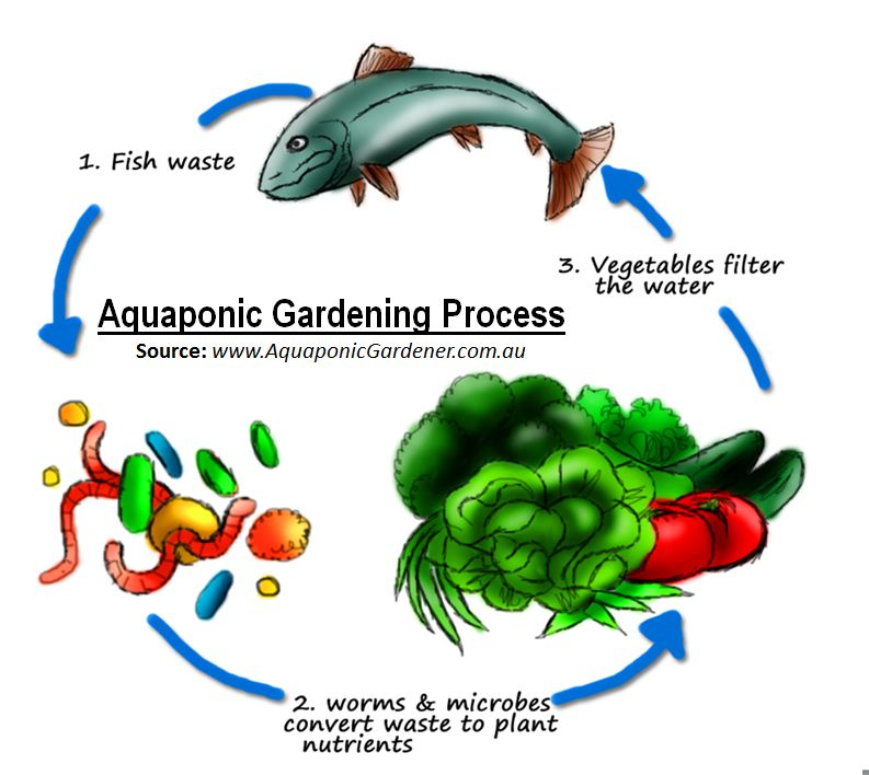 Wednesday, May 25 – Aquaponics by Henry Poling
